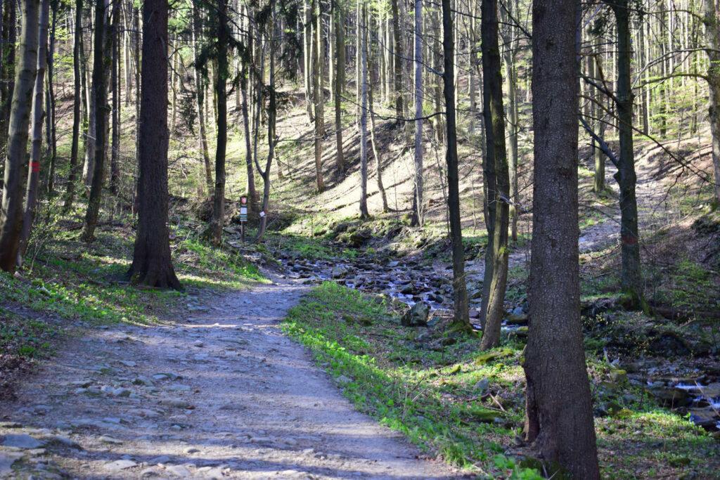 Les pod Smrkem