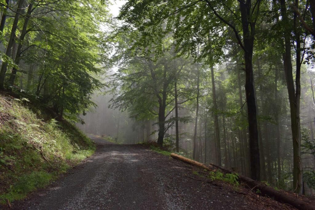 Neznačená lesní cesta