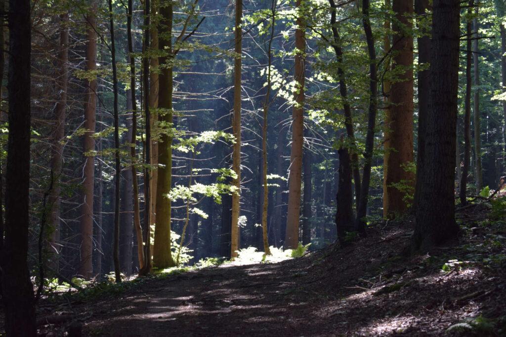 Hustý les, Vsetínské vrchy