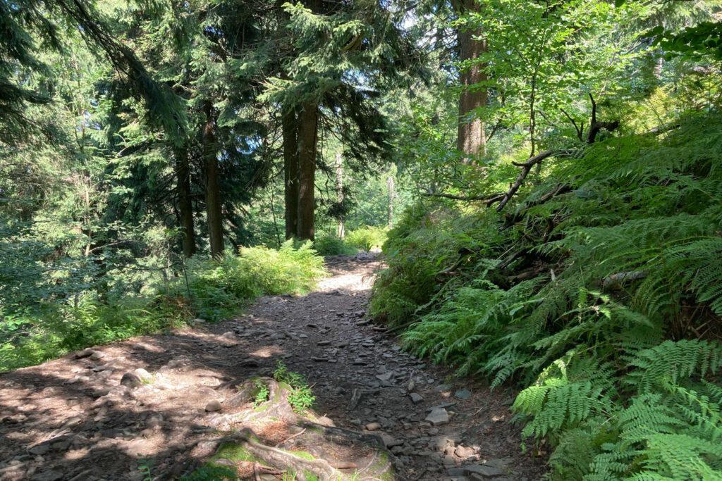 Národní přírodní rezervace Radhošť